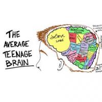 The average teenager brain