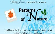 patternsofnature